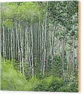 Seasons Of The Aspen Wood Print by Carol Cavalaris