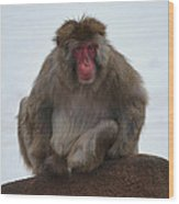 Seated Macaque Snow Monkey Wood Print