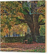 Seated Under The Fall Colors Wood Print