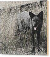 Seattle Silver Fox Wood Print