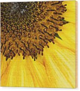 Seattle Sunflower Close-up Wood Print