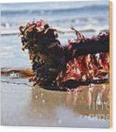 Seaweed 2 Wood Print