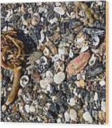 Seaweed And Shells Wood Print