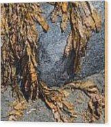 Seaweed On The Rock Wood Print