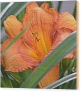 Secret Sunset - Lily Wood Print