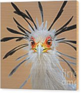 Secretary Bird Portrait Close-up Head Shot Wood Print by Johan Swanepoel