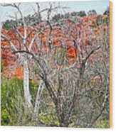 Sedona Arizona Dead Tree Wood Print
