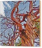 Sedona Arizona Ghost Tree Wood Print
