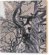 Sedona Arizona Ghost Tree In Black And White Wood Print