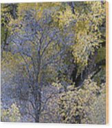 Sedona Fall Color Wood Print