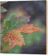 Sedona Leaf 20 Wood Print