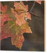 Sedona Leaf 25 Wood Print
