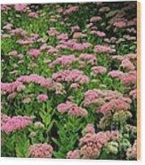 Sedum Garden Wood Print