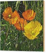 See Fou's Poppies Wood Print