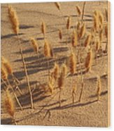 Seed And Sand Wood Print