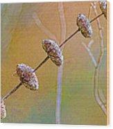 Seed Pod Pagoda Wood Print