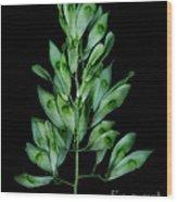 Seed Tree Wood Print