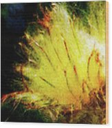 Seedburst Wood Print