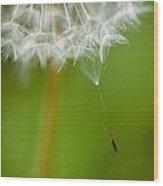 Seeding Wood Print