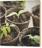 Seedlings  Wood Print