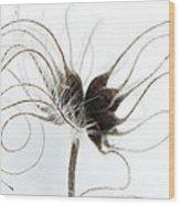 Seeds Wood Print by Anne Gilbert