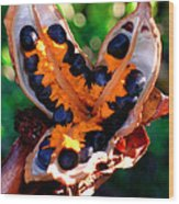 Seeds of Paradise Wood Print