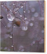 Seeds Of The Smoke Bush Wood Print