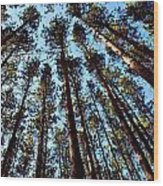 Seeing The Forest Through The Trees Wood Print