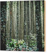 Seeing The Forest With The Trees Wood Print