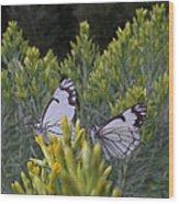 Seeking Autumn Nector Wood Print