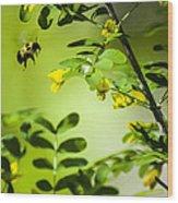 Seeking Nectar Wood Print