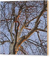 Seeking The Sunrise Wood Print