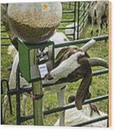 Self Serve Goat Wood Print