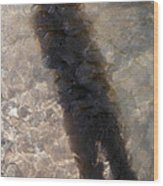 Selfportrait Of A Shadow Wood Print