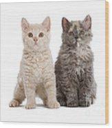 Selkirk Rex Kittens Wood Print