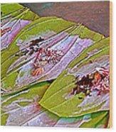 Selling Betel Nut For Chewing In Tachilek-burma Wood Print