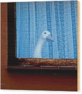 Sembach Window Wood Print