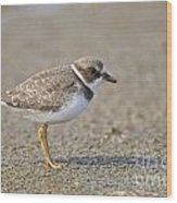 Semi-palmated Plover Pictures 34 Wood Print