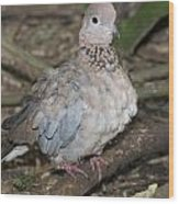 Senegal Turtledove Wood Print by Gerald Murray Photography