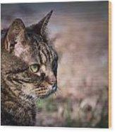 Senior Cat Wood Print