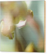 Sensual Touch Of Exotic. Orchid II Wood Print