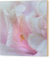 Sensuality. Peach Hibiscus. Macro Wood Print