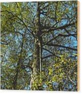 Sentinel 2 Wood Print