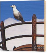 Sentinel Sea Gull Wood Print