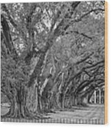 Sentinels Monochrome Wood Print