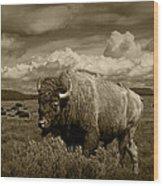 King Of The Herd Wood Print