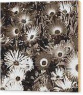 Sepia Asters Wood Print