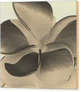 Sepia Bloom Negative Wood Print