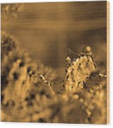 Sepia Cacti Close Up Wood Print