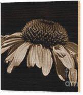 Sepia Daisy Wood Print
